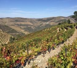 Companhia dos vinhos do Douro