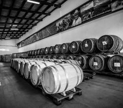 pico-wines-1