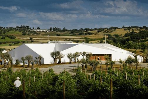 saida504x338lans-vinyard