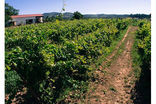 terras-de-conclave-vinhas1625649902